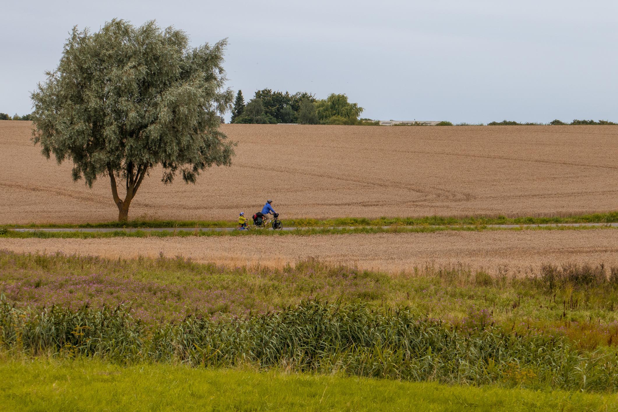 Felder bei Herslev
