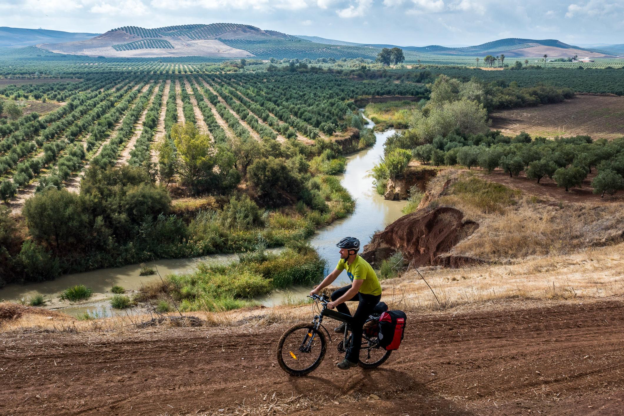 In Andalusien geht es auf einsamen Wegen durch endlose Olivenplantagen.