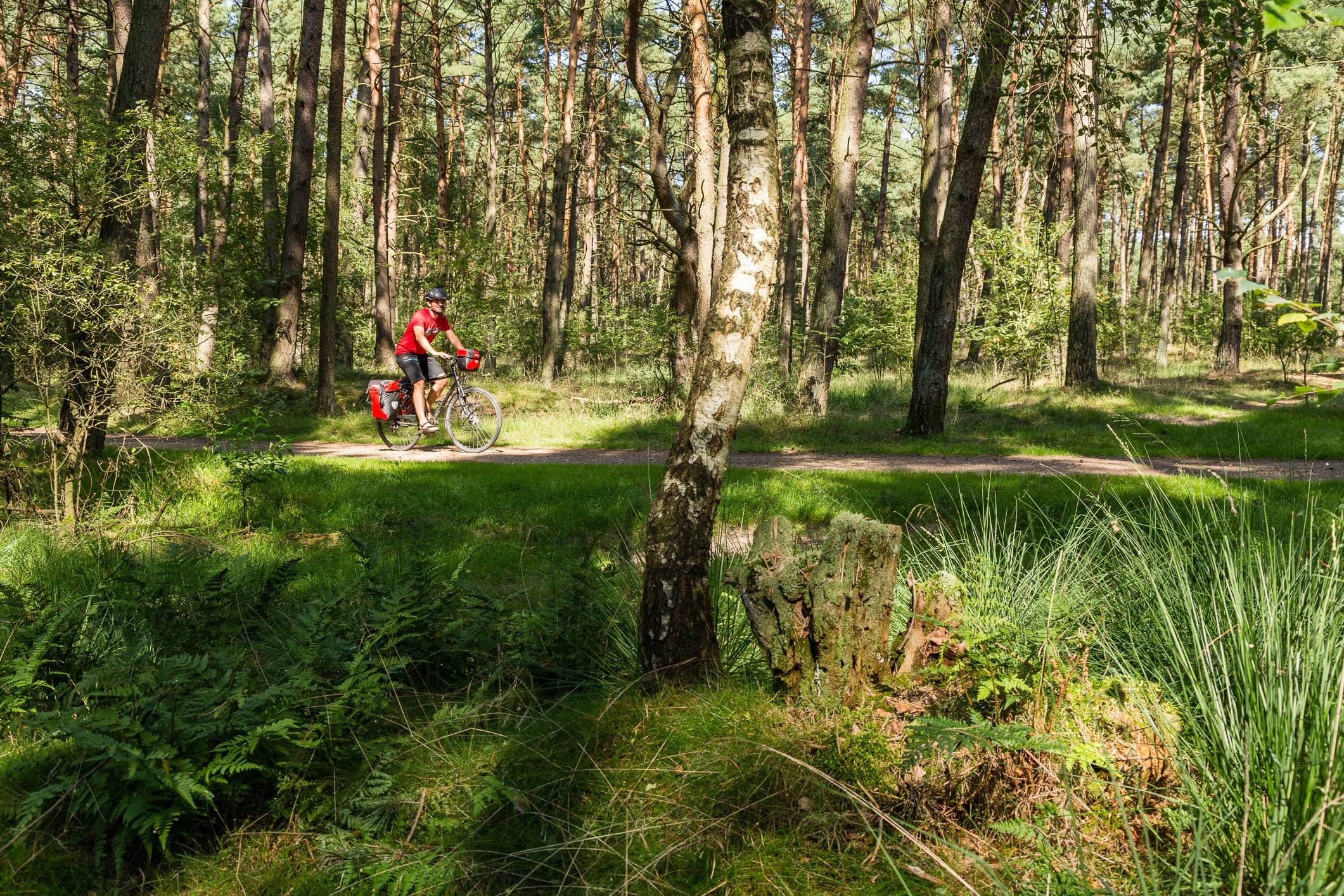 Der Ochsenweg verläuft durch Felder, Weiden, Moore und Wälder
