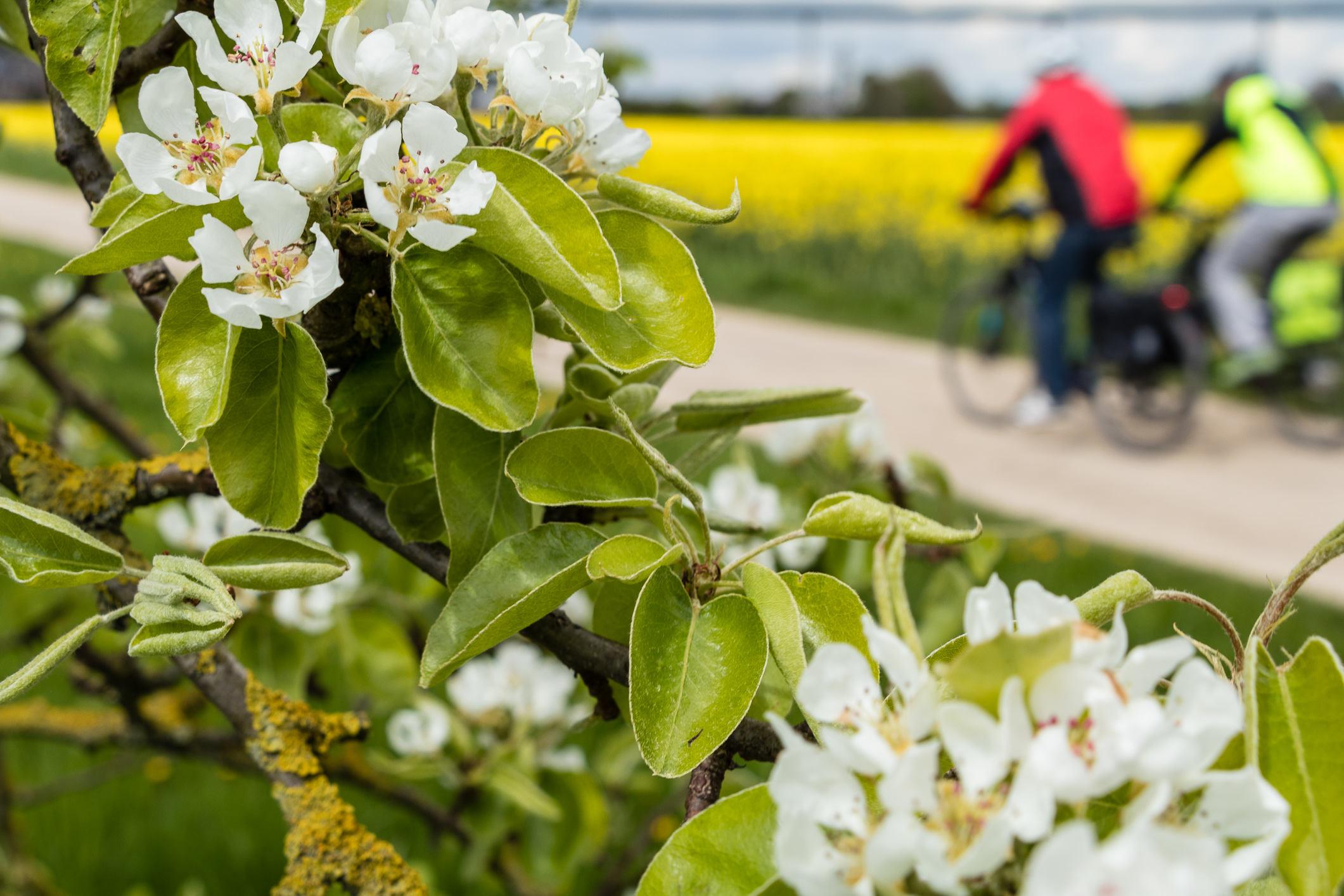 Frühling bei Mintard