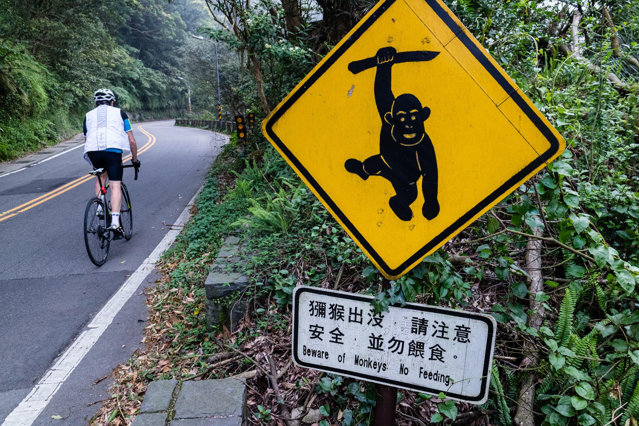 Bitte nicht füttern! Die wildlebenden Affen sind die Nähe des Menschen gewohnt.